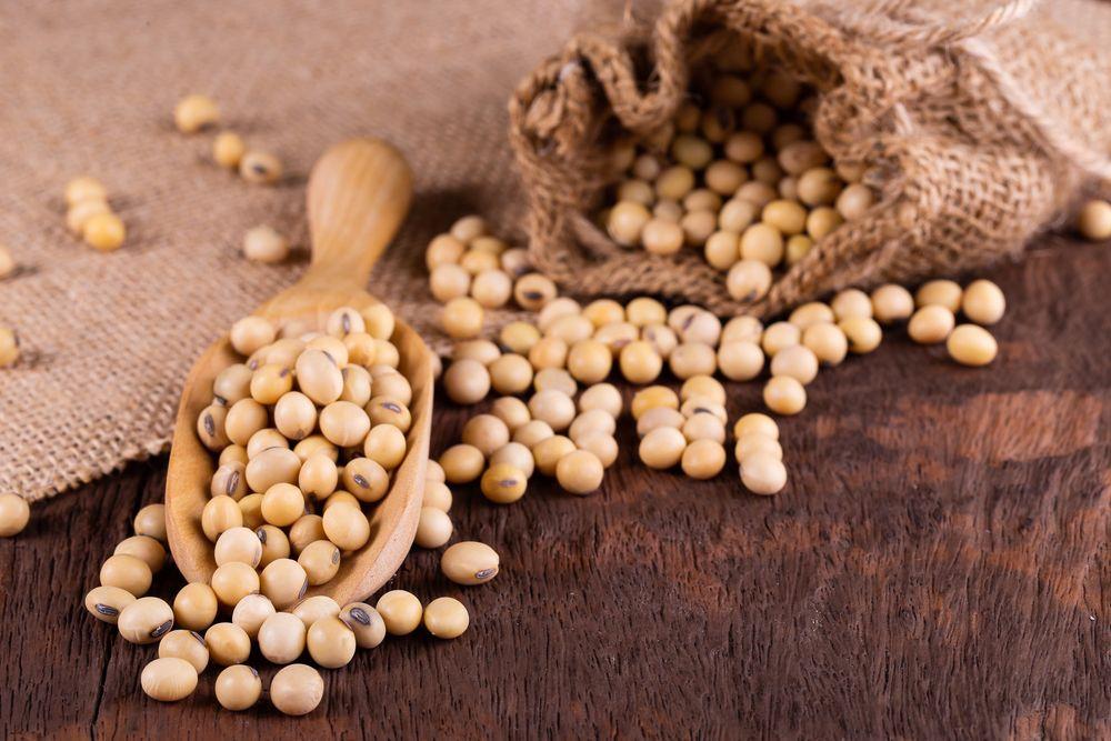 Soybean Derivatives